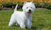 неаллергичные породы собак с фото