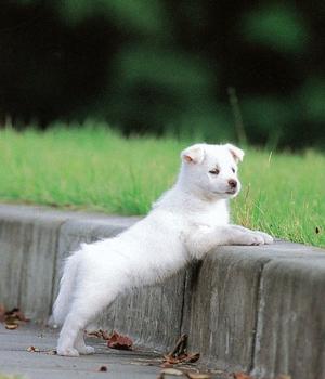 Кису щенок фото