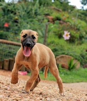 Африканис щенок фото